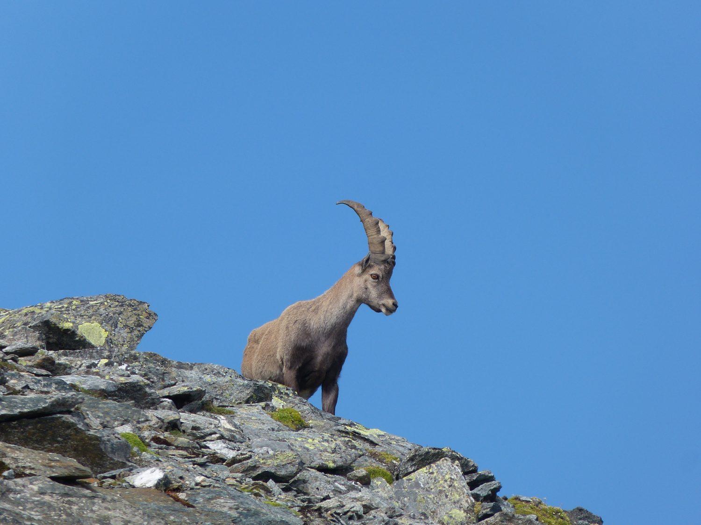 Blechnerkamp- Horntalspitze- Schafgrübler