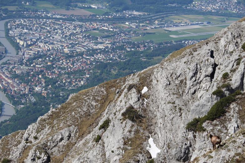 Tiefblicke auf Innsbruck und die Gams hat mi a schu im Aug