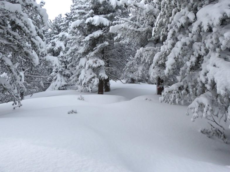 So viel Schnee, nahezu 50cm feinster Pulverschnee