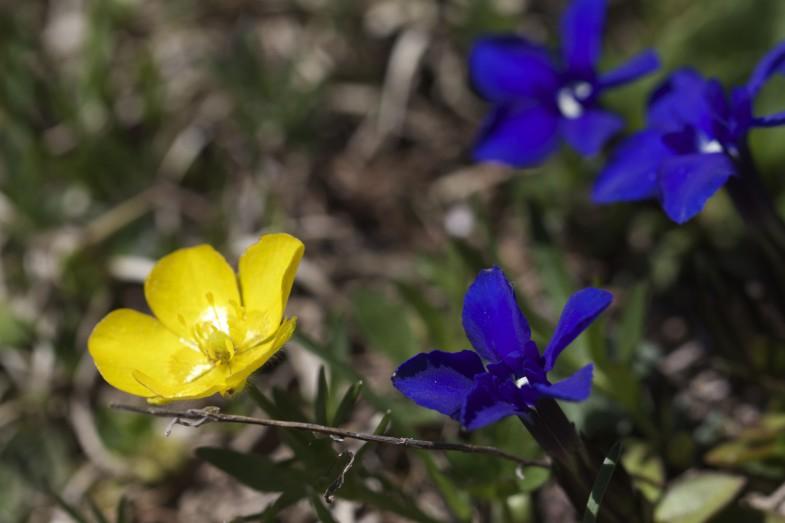 Gelb Blau