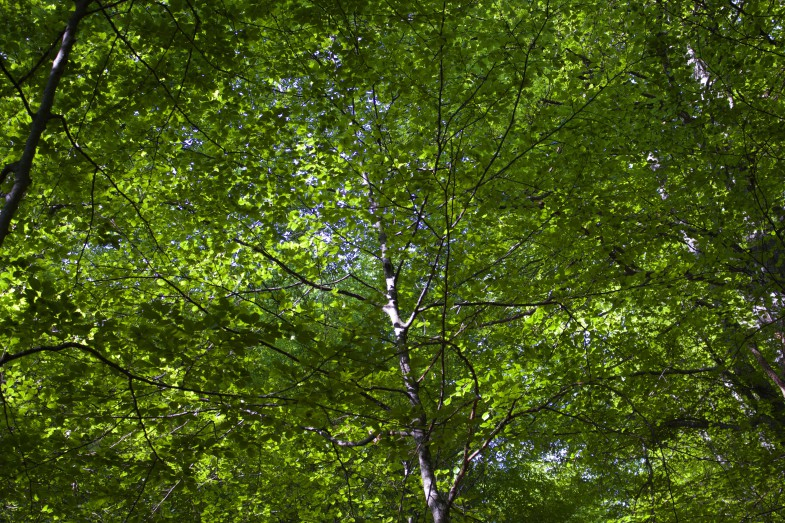 Wunderschöner Blätterwald, die Heimat vieler Zecken ;-D