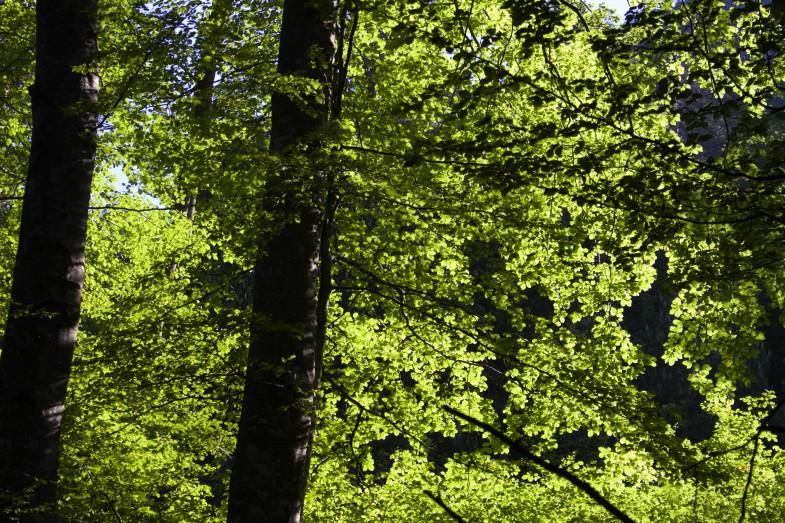 Wieder ein traumhafter Tag. Durch lichten Blätterwald im unteren Teil aufwärts.