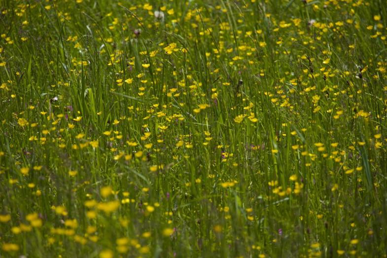 Traumhafte Blumenwiesen
