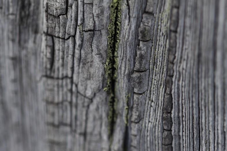 Macroaufnahme Holz