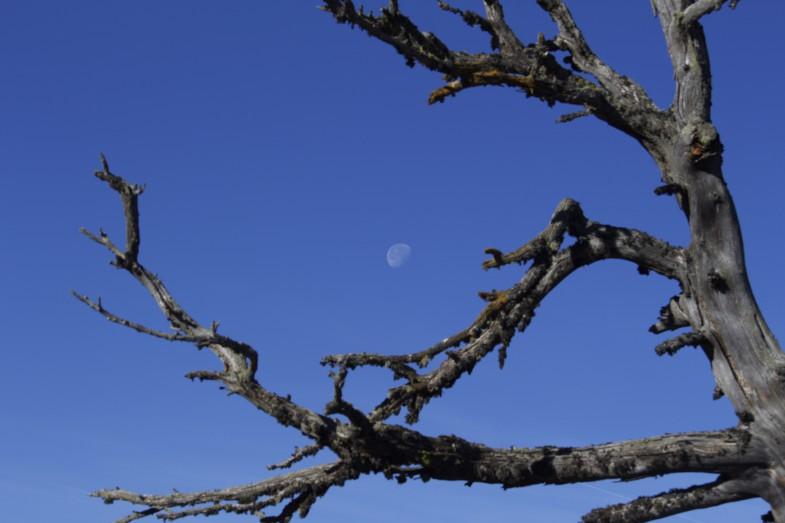 Mond steht noch am Himmel