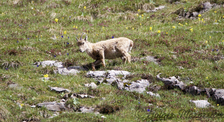 Montscheinspitze Karwendel