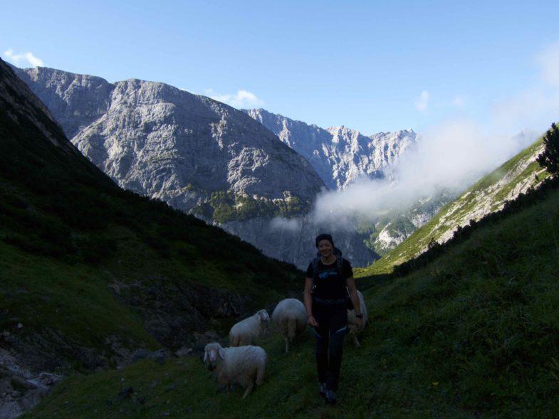 Alex und Ihre Schäfchen :-D Nur die dicken blieben herunten, der Rest stand am Grat zum unbenannten Gipfel