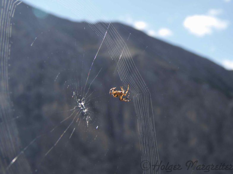 Achtung Spider