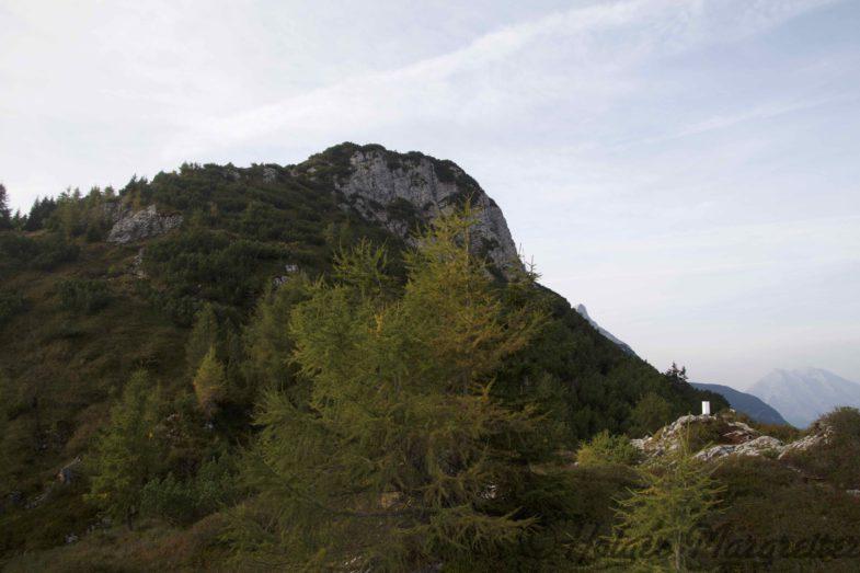 Bewaldeter Anstieg