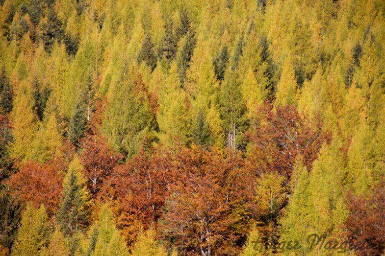 Traumhafte Herbststimmung