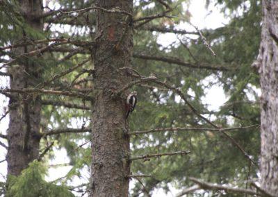 Das Männchen war da eher scheu und wartete viel länger ab- erkennbar am roten Fleck am Hinterkopf
