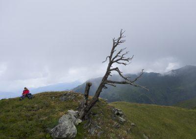 Anflug auf den meistfotografiertesten Baum in Tirol wahrscheinlich