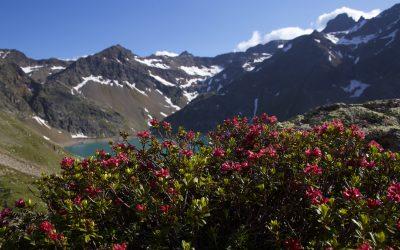 Zum Sundowner auf den Pockkogel- Stubaier Alpen