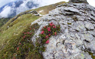 Große Padasterhausrunde- Stubaier Alpen