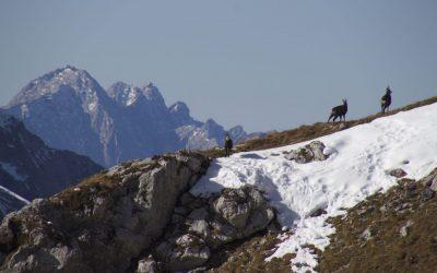 Karwendeltrio oder hoch über dem Hochalmsattel- Karwendel